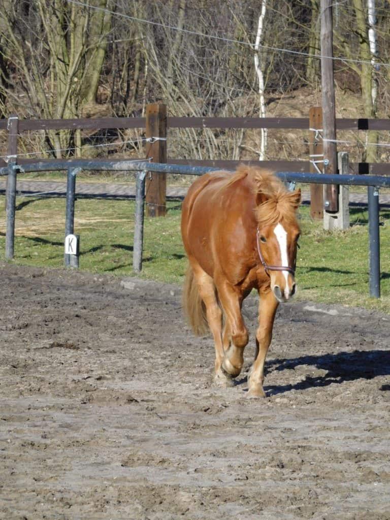 Ranch-Piwonia-Bobby-022-e1464801980616