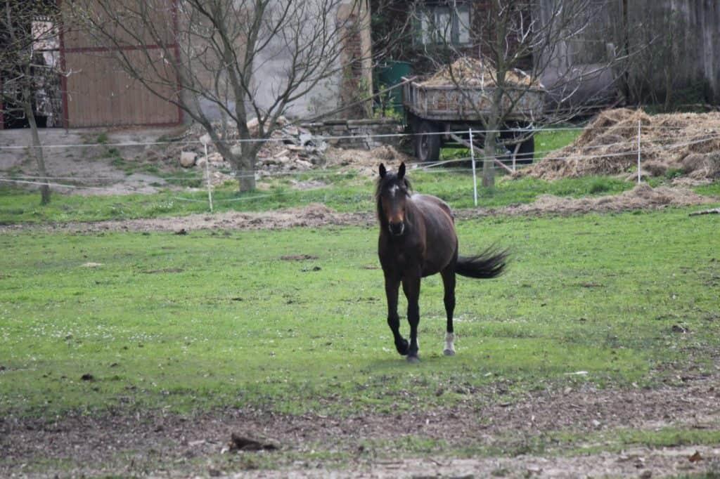 Ranch-Piwonia-Piwonia-009-e1464462017131
